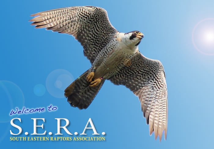 Southeastern Raptor Association (SERA Online)